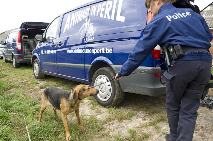 Près de 100 chiens saisis à Chastre chez une comtesse (Belgique) Saisie-chastre-001