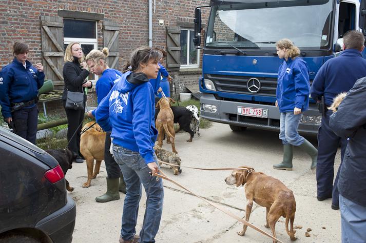 Près de 100 chiens saisis à Chastre chez une comtesse (Belgique) Saisie-chastre-002