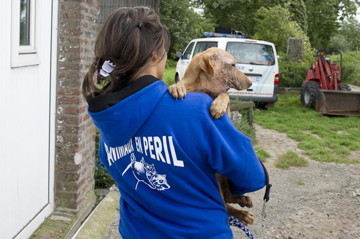 Près de 100 chiens saisis à Chastre chez une comtesse (Belgique) Saisie-chastre-003