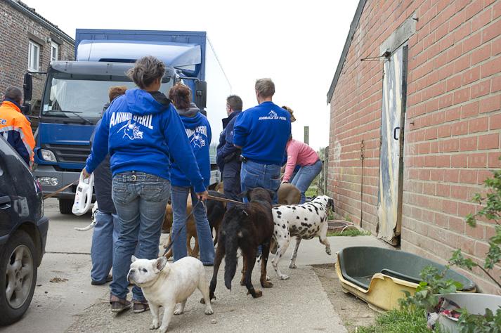 Près de 100 chiens saisis à Chastre chez une comtesse (Belgique) Saisie-chastre-004