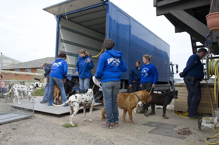 Près de 100 chiens saisis à Chastre chez une comtesse (Belgique) Saisie-chastre-005
