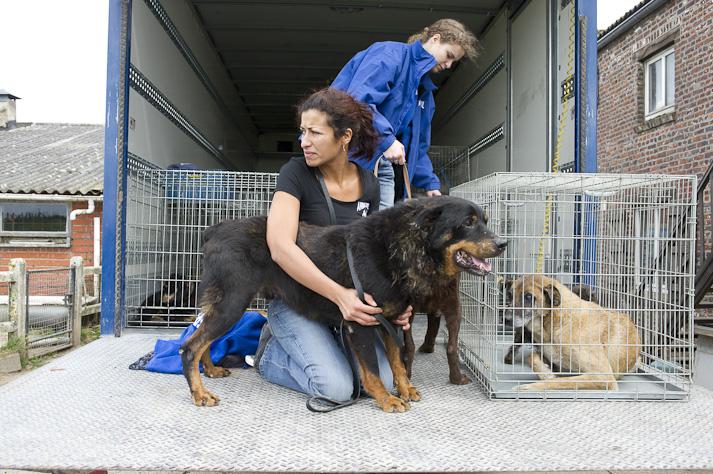 Près de 100 chiens saisis à Chastre chez une comtesse (Belgique) Saisie-chastre-008
