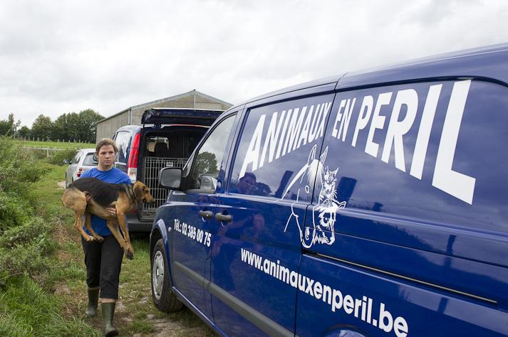 Près de 100 chiens saisis à Chastre chez une comtesse (Belgique) Saisie-chastre-010