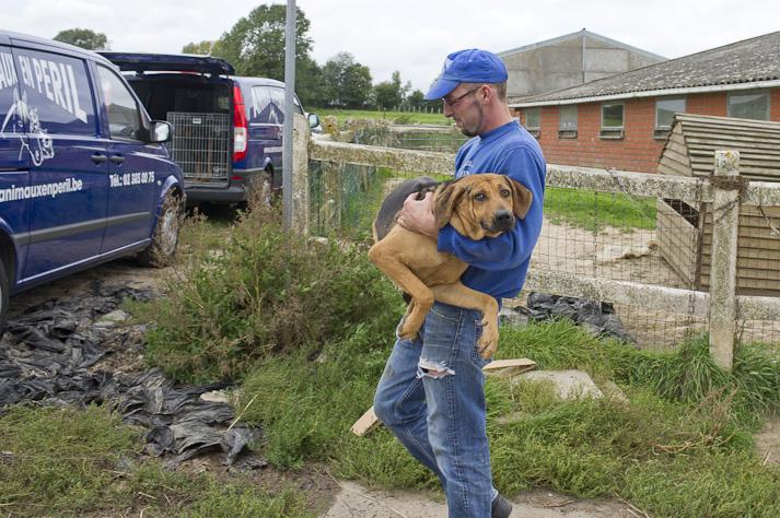 Près de 100 chiens saisis à Chastre chez une comtesse (Belgique) Saisie-chastre-012