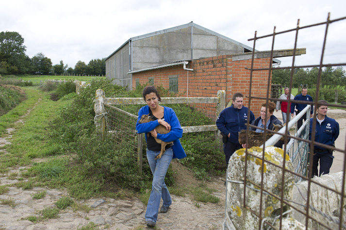 Près de 100 chiens saisis à Chastre chez une comtesse (Belgique) Saisie-chastre-014