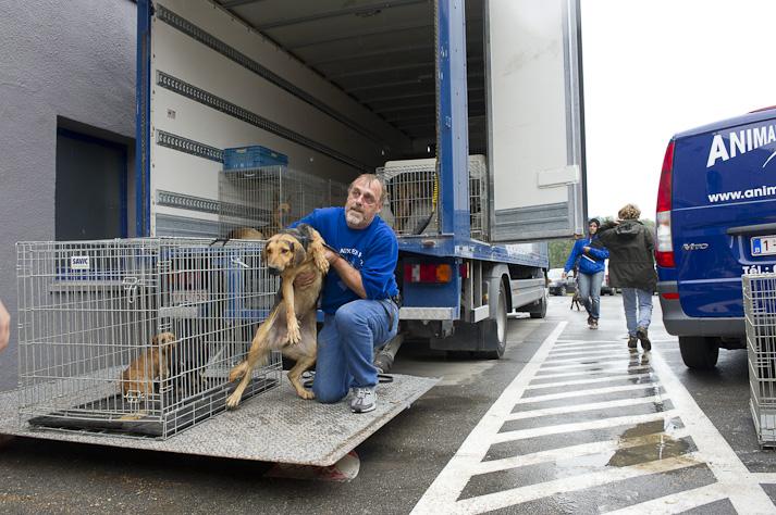 Près de 100 chiens saisis à Chastre chez une comtesse (Belgique) Saisie-chastre-015