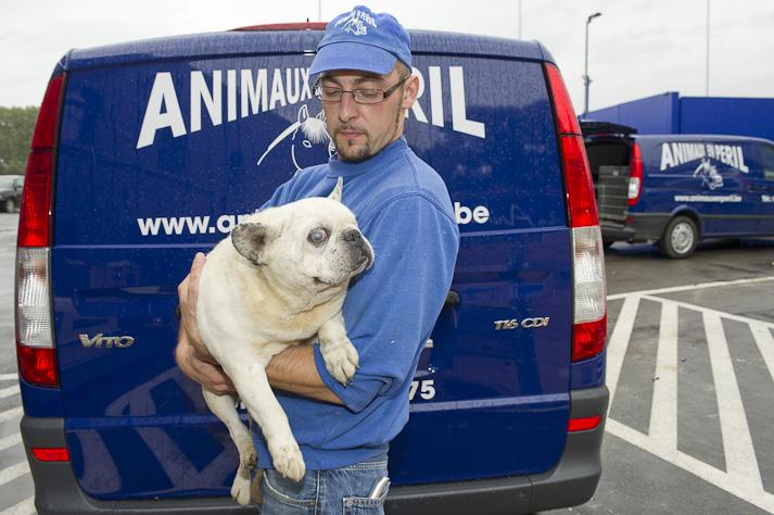 Près de 100 chiens saisis à Chastre chez une comtesse (Belgique) Saisie-chastre-016