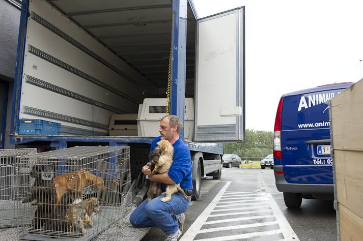 Près de 100 chiens saisis à Chastre chez une comtesse (Belgique) Saisie-chastre-017