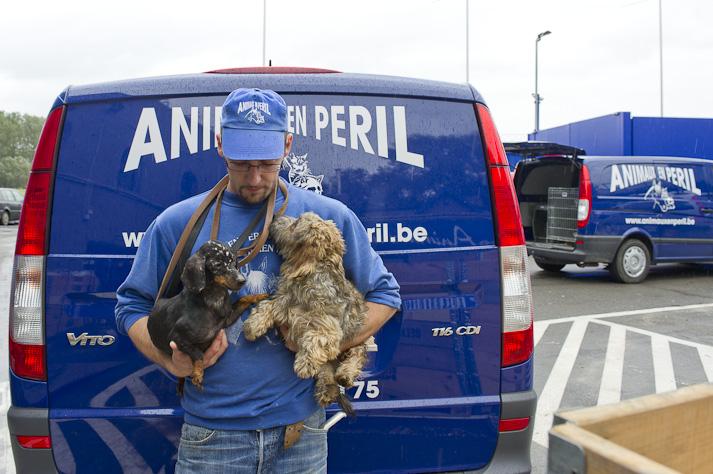 Près de 100 chiens saisis à Chastre chez une comtesse (Belgique) Saisie-chastre-019